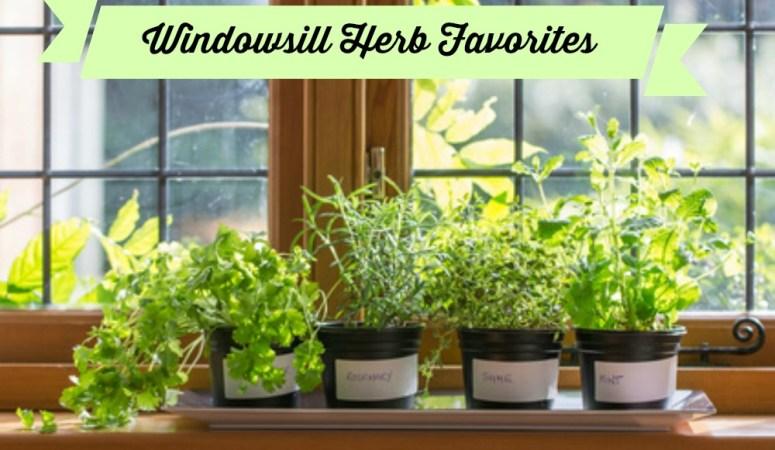Windowsill Herbs in a window