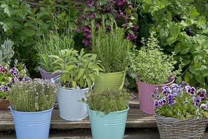 Mix of herbs in colorful buckets