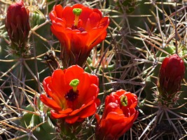 Desert Blooms at Chaco