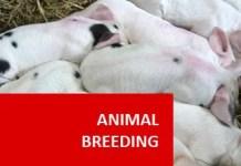 inbreeding and crossbreeding