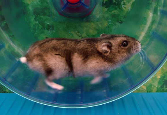 The Hamster wheel that is Swedish healthcare