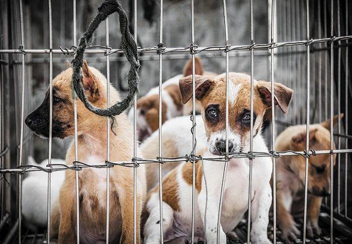 Δείκτης πολιτισμού η συμπεριφορά απέναντι στα ζώα