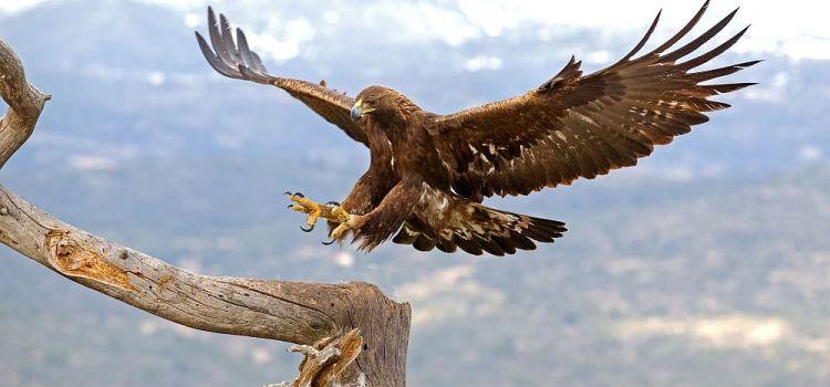 Εγκληματική θανάτωση σπάνιων ειδών αετών