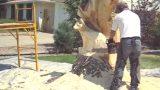 Φτιάχνει ένα ρακούν από ένα τεράστιο παλιό κορμό δέντρου! (Βίντεο)