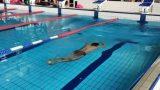 Είστε έτοιμοι για μια πρόκληση; Δείτε την ανάποδη κολύμβηση