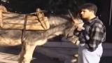 Καταπληκτική φάρσα! Ο γάιδαρος μιλάει και τρελαίνει το χωριό. (Video)