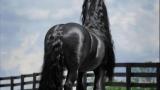Από πίσω μοιάζει με ένα συνηθισμένο Άλογο. Μόλις όμως γυρίσει από μπροστά προσέξτε την χαίτη του.