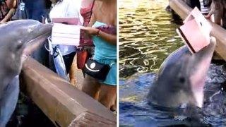 Δελφίνι αρπάζει το τάμπλετ τουρίστριας γιατί προφανώς δεν τους αρέσουν οι φωτογραφίες.