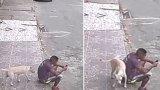 Σκύλος μπερδεύει άνθρωπο με κολόνα και «ανακουφίζεται» στην πλάτη του