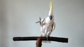 papagalos-790×400