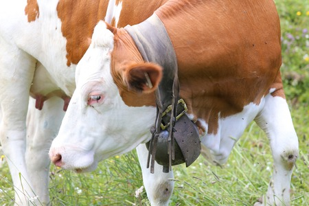 Mrtracking also Tracking together with Cow Bell Replaced moreover Pet Owners Use Gps Devices To Find Lost besides News. on gps tracking devices for animals