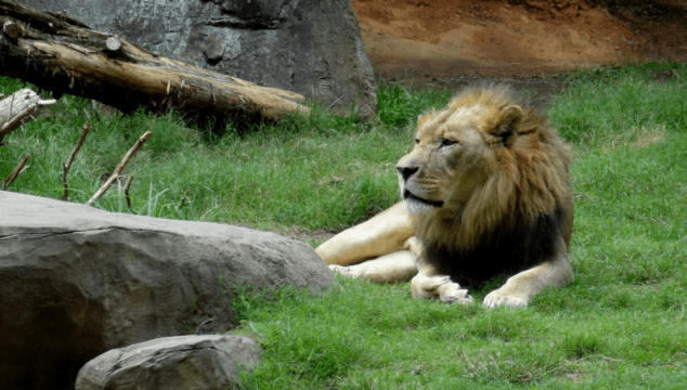 Day Trip | NC Zoo – Tips for Traveling with Your Toddler