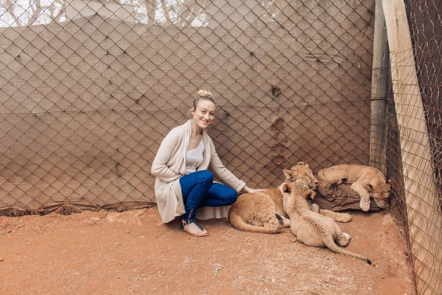 petting lion cubs south africa