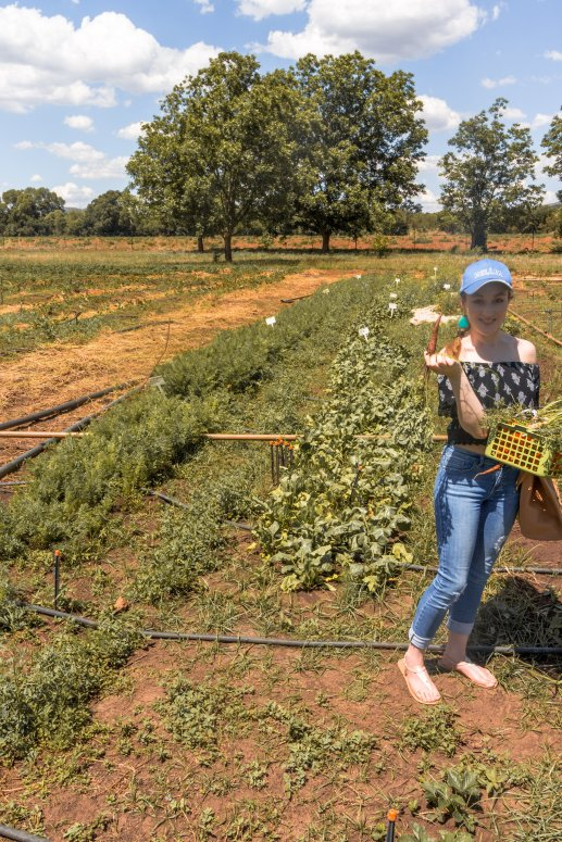 strawberry-picking-southafrica-2