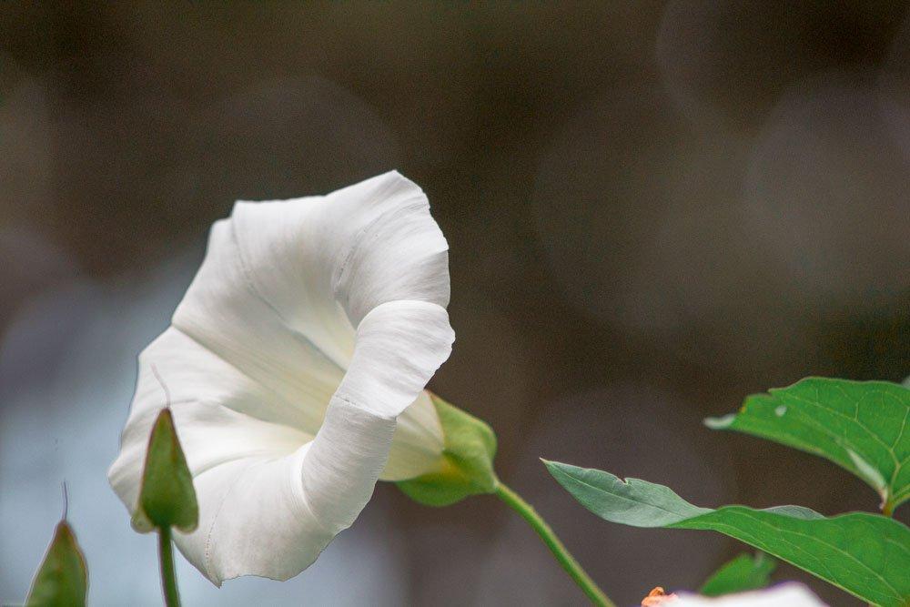 wellington-botanic-gardens-flower