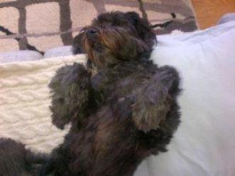 Max lounging