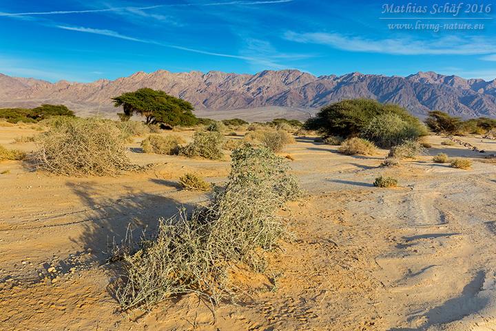 Landschaft_Israel_5DSR_29112