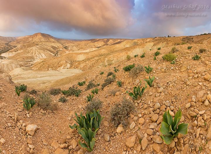 Landschaft_Israel_5DSR_20375_bis_20379