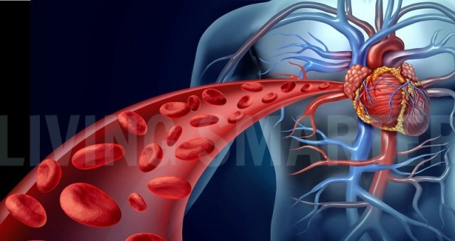 Fibromyalgia and Blood Vessels  – Is There a Connection?