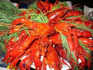 European crayfish / Broad-fingered crayfish / Noble crayfish (Gambero di fiume / Gambero in acqua dolce) (Astacus astacus / Astacus fluviatilis)