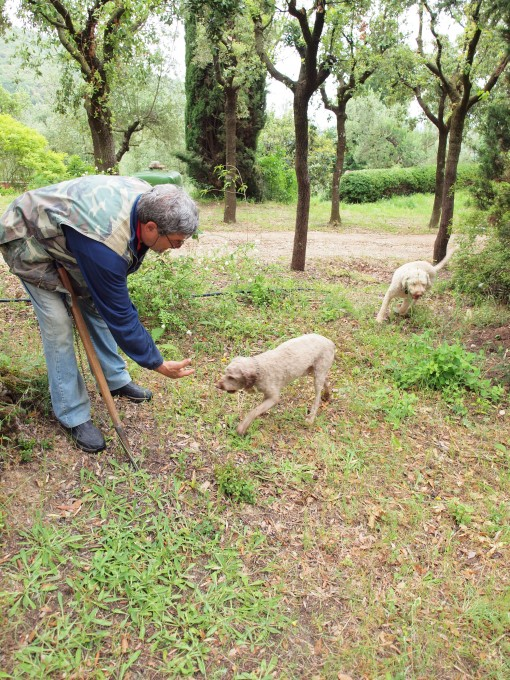 Truffle hunting dogs by Elisabets