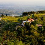 Valpolicella vineyards by Ryan Opaz