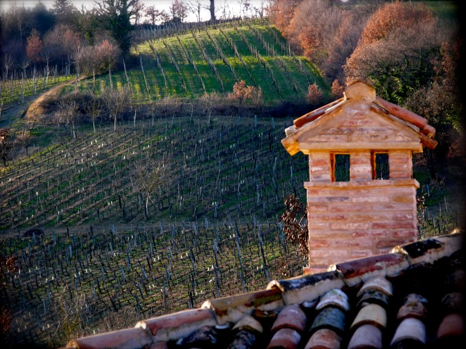 Vineyard by Marco Ferracuti