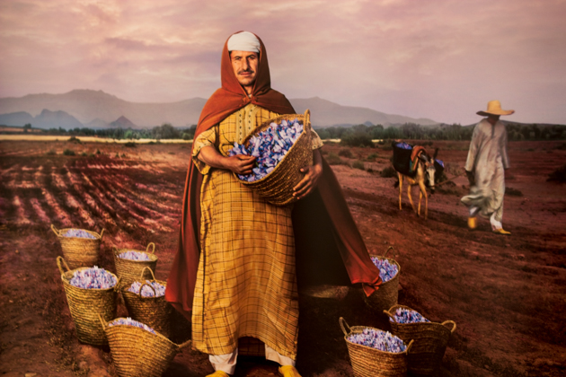 A Moroccan saffron farmer