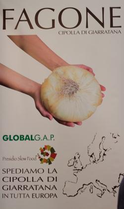 Fagone onion