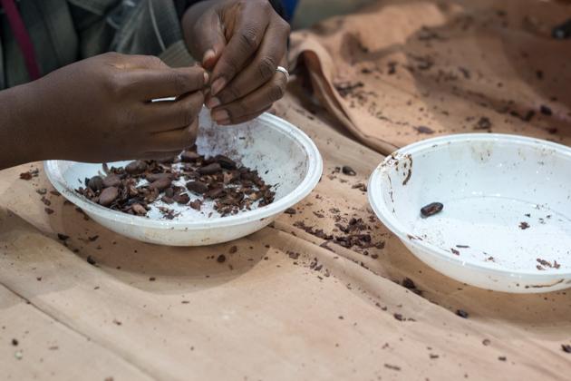 Shelling cocoa beans