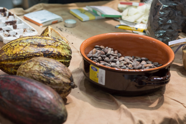 Cocoa fruit and cocoa beans