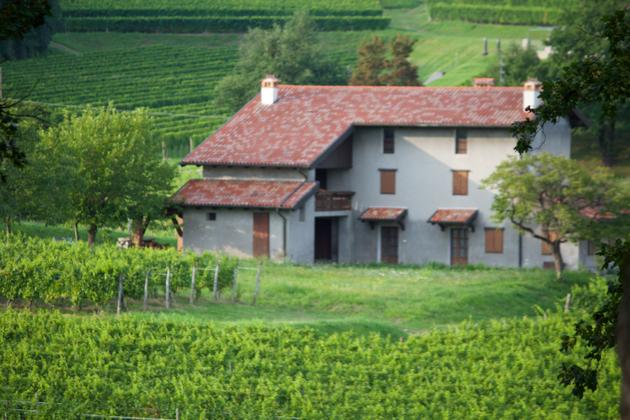 Pali vineyards