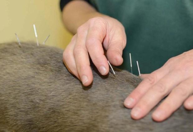 acupuntureblog