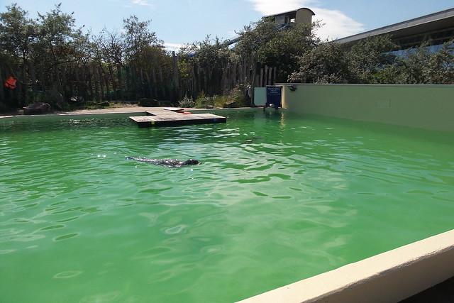 Zeehonden en zeeleeuwen
