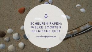 Schelpen rapen welke soorten Belgische kust