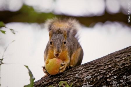 squirrel raid