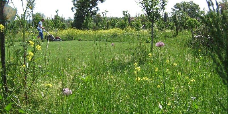 Organic Gardening in Italian Gardens