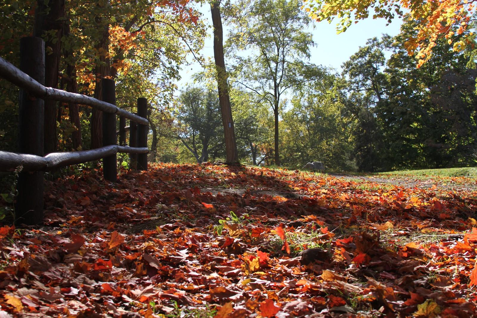 Niagara Parkway in Autumn