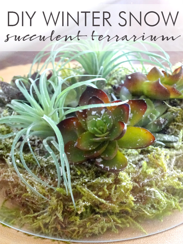 DIY Winter Snow Succulent Terrarium
