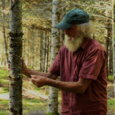 wild plant medicine elder