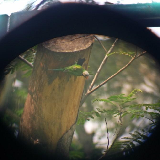 sponsored-birdwatching-6