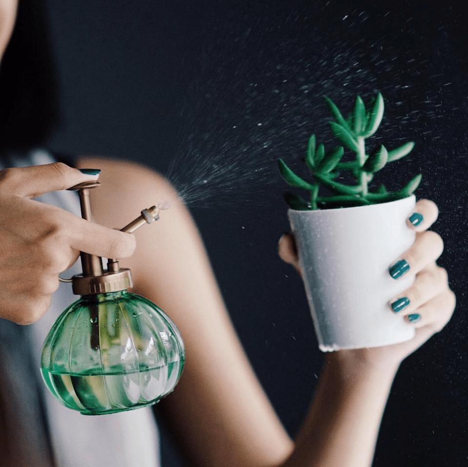 tips-merawat-tanaman-rangga-kusuma-living-loving