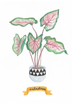 sponsored-style-decor-tanaman-teras-caladium
