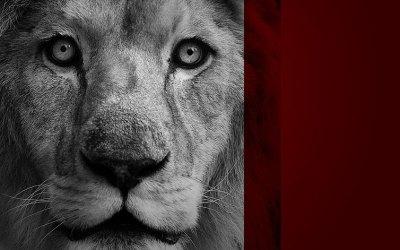 Let The Lion Loose
