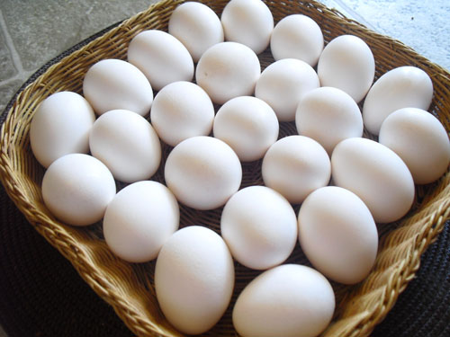 eggs-poached-or-boiled