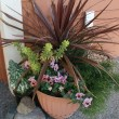 Master Gardeners' Tip of the Month: Container Gardening