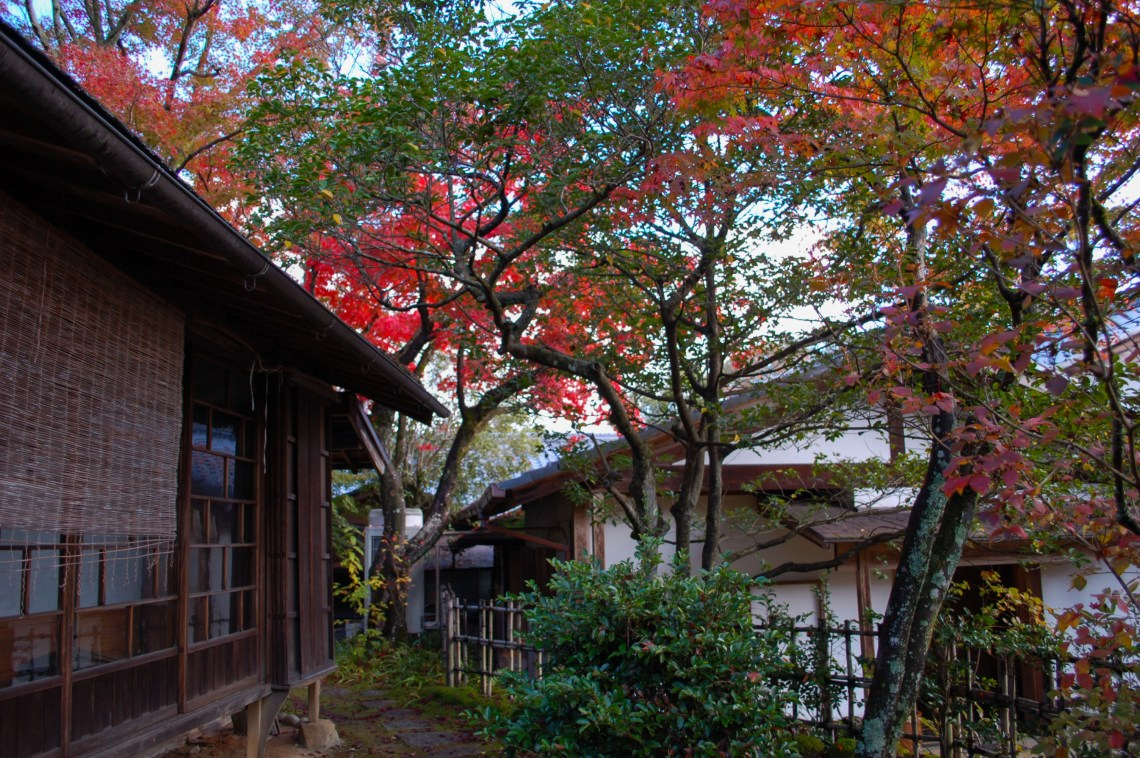 Maple tree in front of a Japanese house