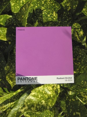 Radiant Orchid with foliage green
