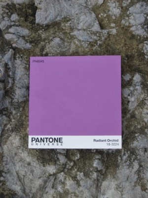 Radiant Orchid with stone grey