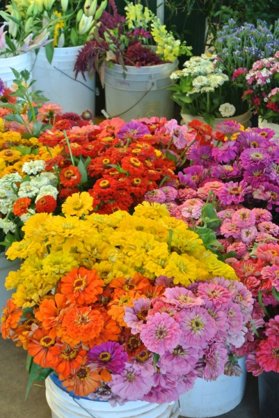 Zinnias Farmers Market with Living With Color Designs